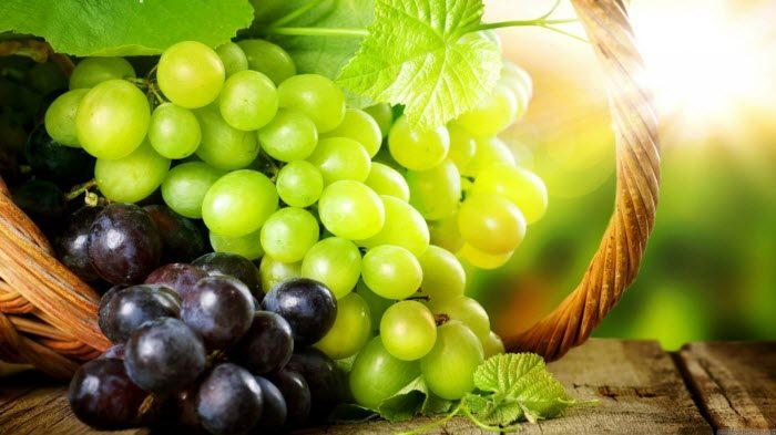 castas de vinho